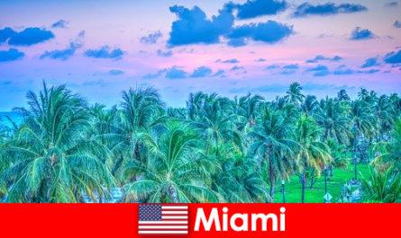 偉大な熱帯の荒野とマイアミの素晴らしい自然