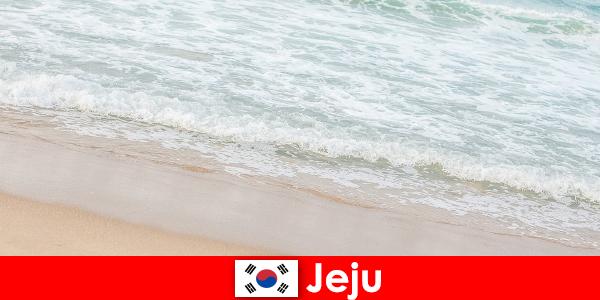 その細かい砂と澄んだ水を持つ済州ビーチでの家族の休日のための理想的な場所