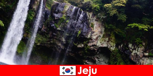 韓国の済州は、外国人のための素晴らしい森林を持つ亜熱帯火山島