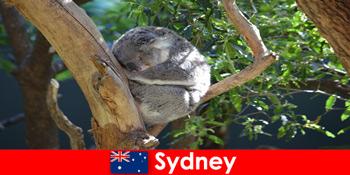一晩の経験を持つエキゾチックな動物園で目的地シドニーオーストラリア