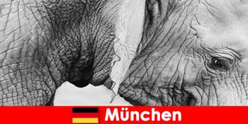 ドイツミュンヘンで最もオリジナル動物園への訪問者のための特別な旅行